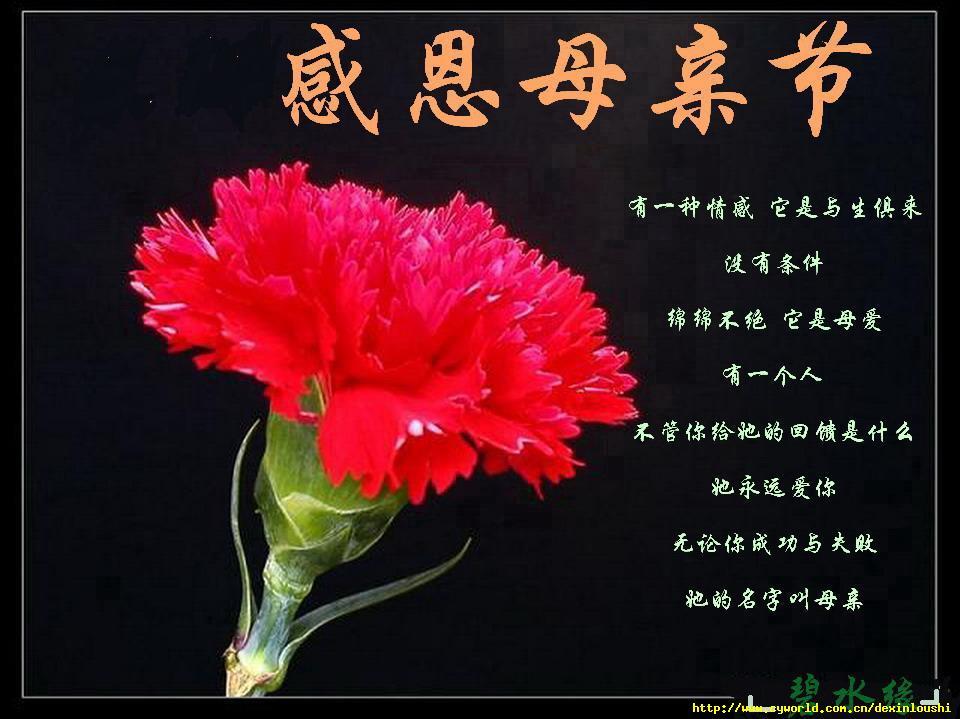 写在母亲节 - 水天一苇 - yuqingkelaoshi的博客